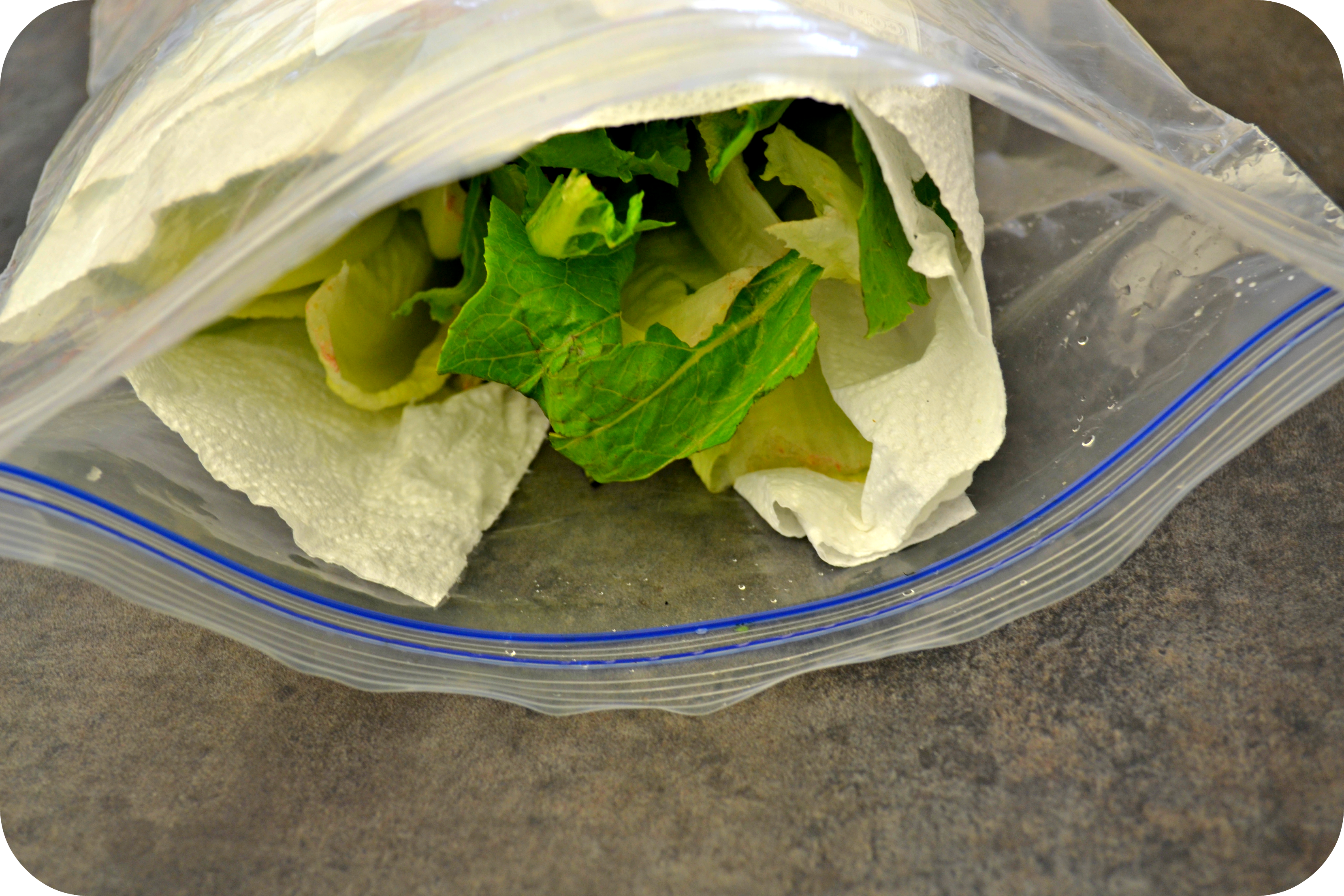 Romaine Lettuce Hack
