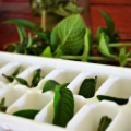 Reduce food waste when you save Fresh Herbs in Ice Cube Trays and freeze for later use; perfect in drinks, broths, or added to your favorite recipes.