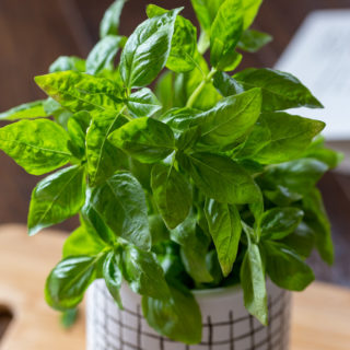 Basil Health Benefits + Basil Recipes